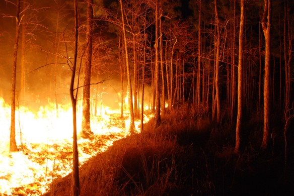 forest fire creeps through at night